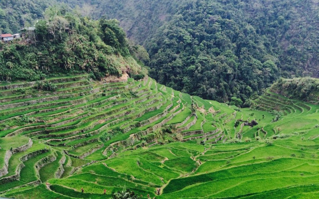 Batad Rice Terraces and Tappiya Falls: First Timer's Budget Travel Guide
