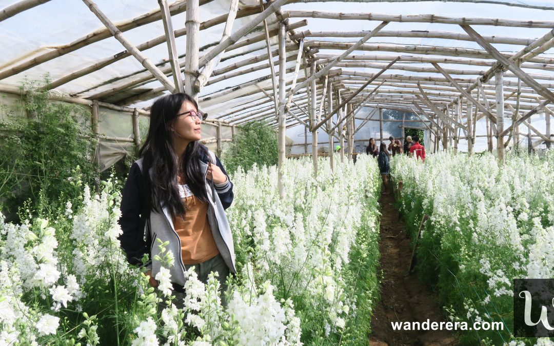Northern Blossom Flower Farm Atok, Benguet : Your Ultimate Travel Guide