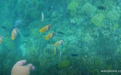 Binukbok View Point Resort: Snorkeling Paradise in Batangas