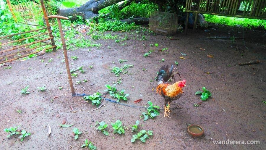 No Limits KFB Farm Resort