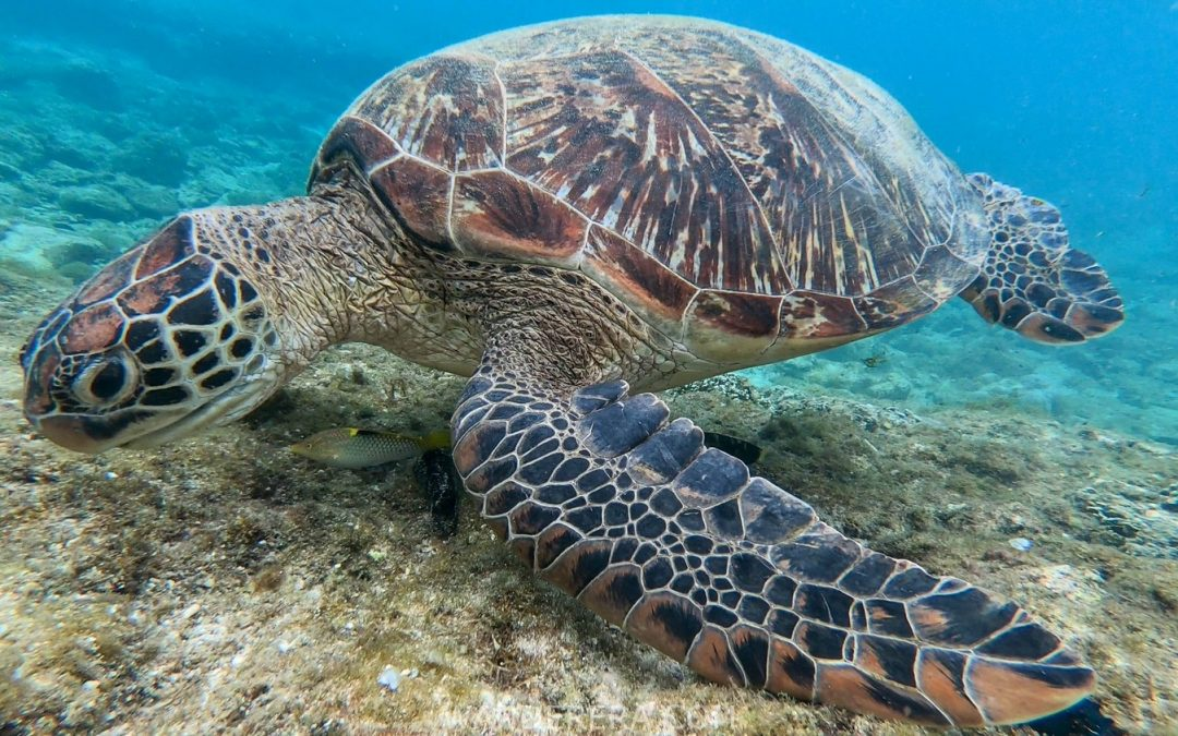 Apo Island 2019 Travel Guide: Snorkeling in Turtle Paradise