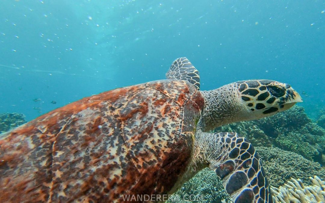 Moalboal Island Hopping Travel Guide: A Snorkeling Paradise