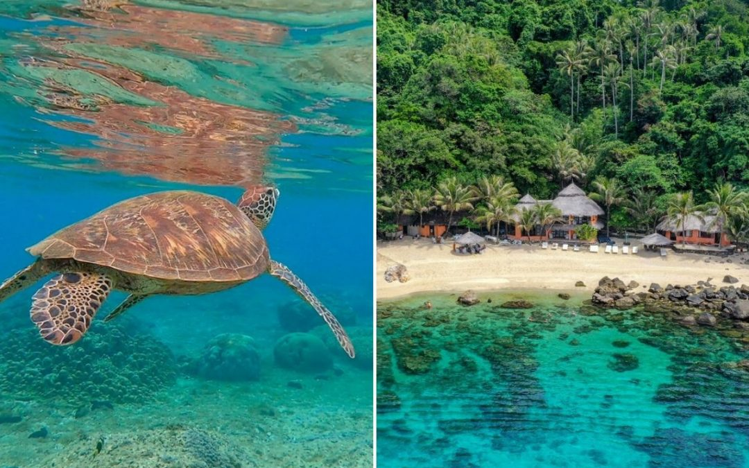 Apo Island 2020 Travel Guide: Snorkeling in Turtle Paradise