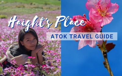 Check out the Sakura Flowers in Atok, Benguet: Haight's Place