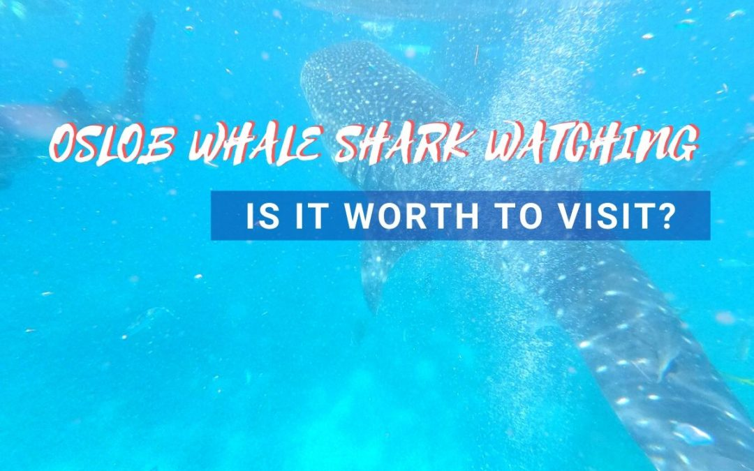 Oslob Whale Shark Watching: Is it Worth to Visit?